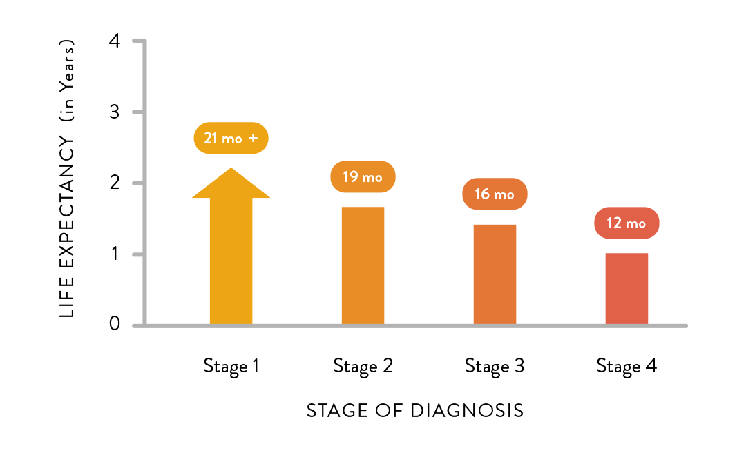 Mesothelioma Life Expectancy by Stage